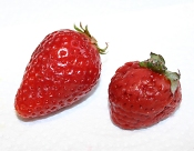 strawberry and strasberry together